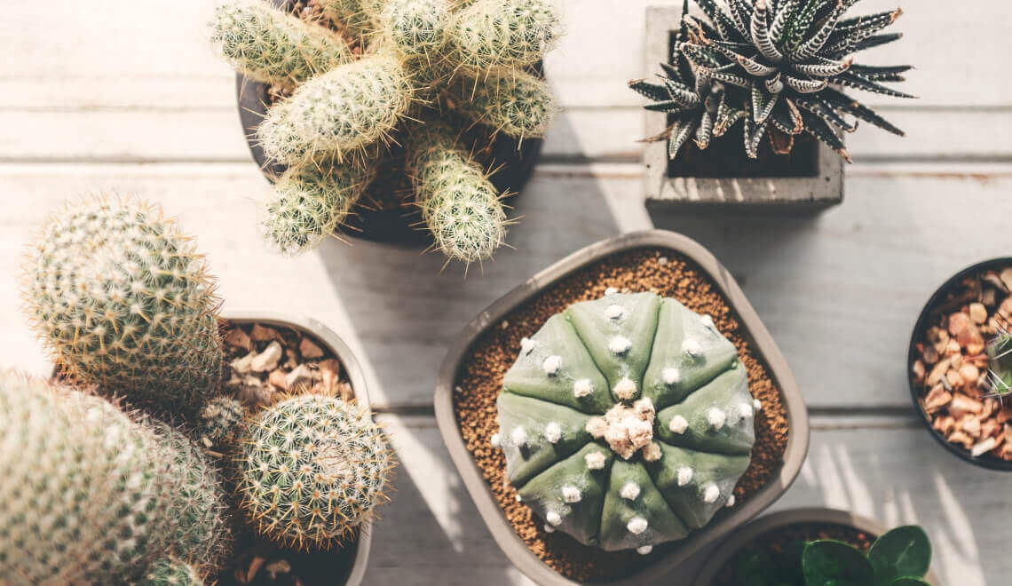 10-plantas-para-deixar-o-seu-apartamento-florido