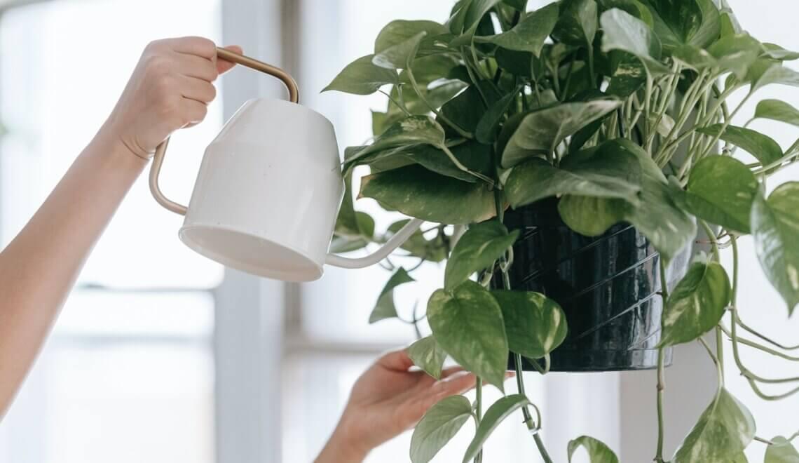 Tudo o que você precisa saber sobre as plantas variegadas